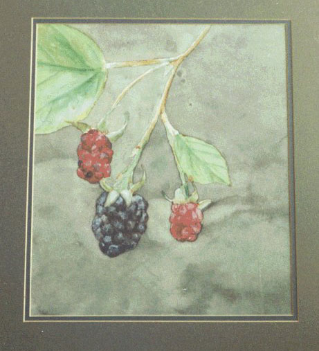 Berries, watercolor